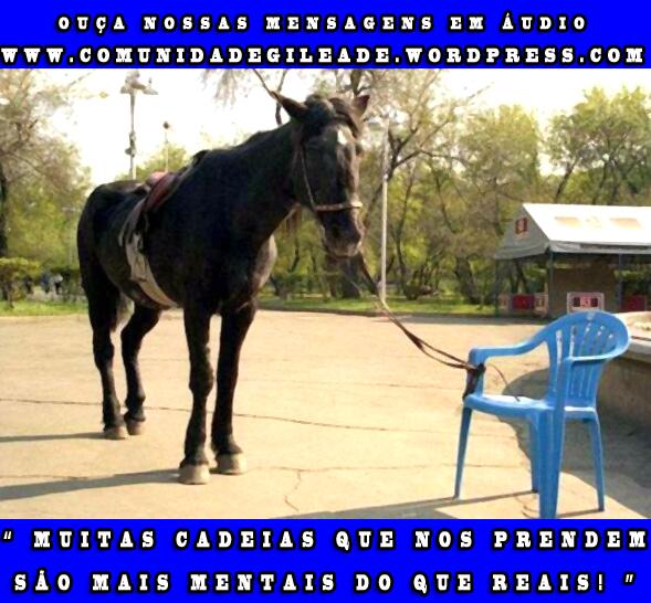 cavalo preso a cadeira plástica_comunidadegileade.wordpress.com
