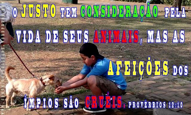 CUIDADO CRISTÃO DE ANIMAIS_Comunidadegileade.wordpress.com